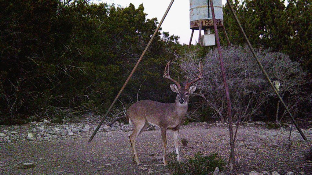 Hunting Ranch for Sale in Texas - Satterfield Road, Leakey, TX 78873